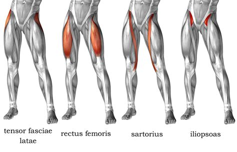 what are the main muscles used in hip flexion vs hip