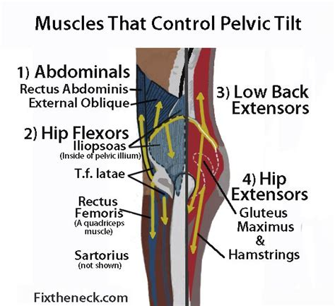 what causes hip flexor tendonitis in dancers inc schedule