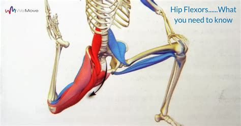what does it mean when your hip flexor hurts