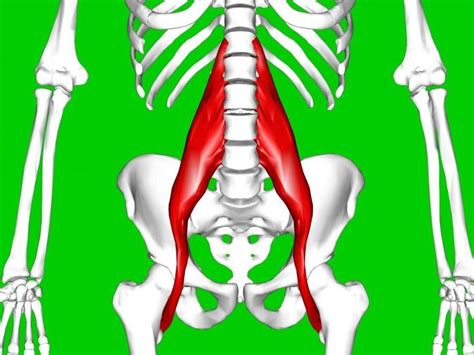 what is hip flexor tendonitis icd 10