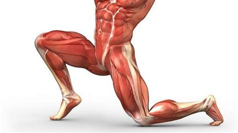 what is included in the hip flexors