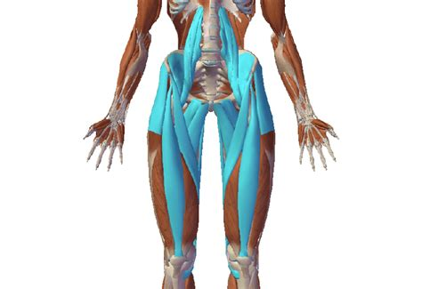 what is your hip flexor muscles injury in sports
