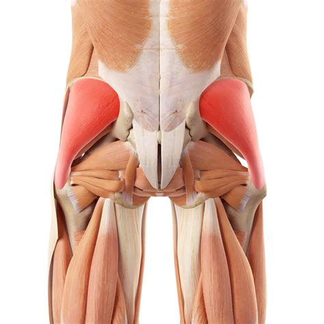 what is your hip flexor tendon injuries