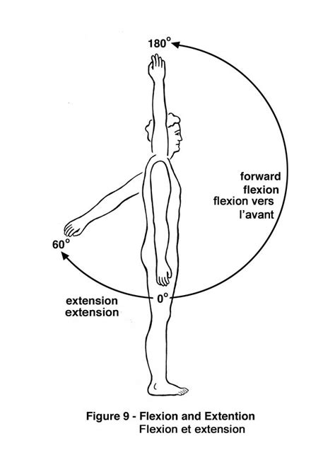 what muscles engage in shoulder flexion muscles and rom