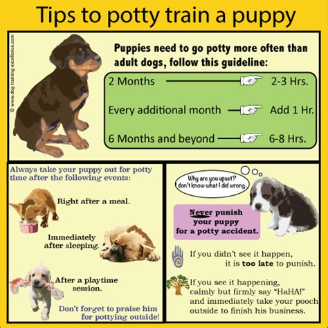 What Age Should You Potty Train A Dog