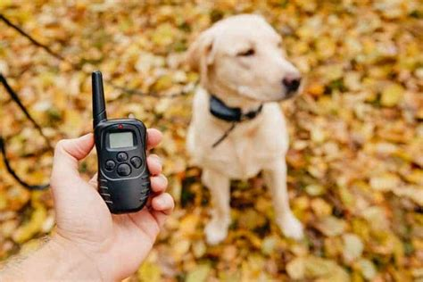What Is The Best E Collar For Dog Training