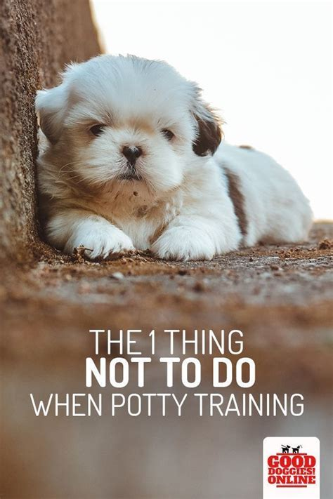 What Is The Best Way To Potty Train A Dog