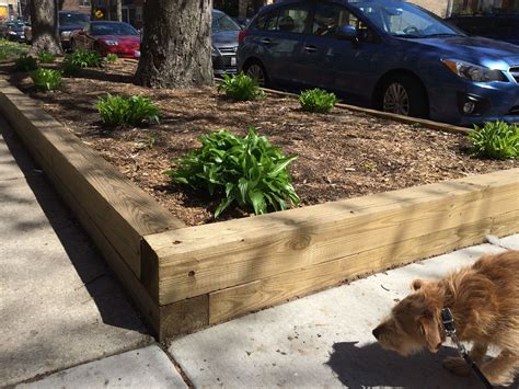 What Wood To Use For Raised Vegetable Beds