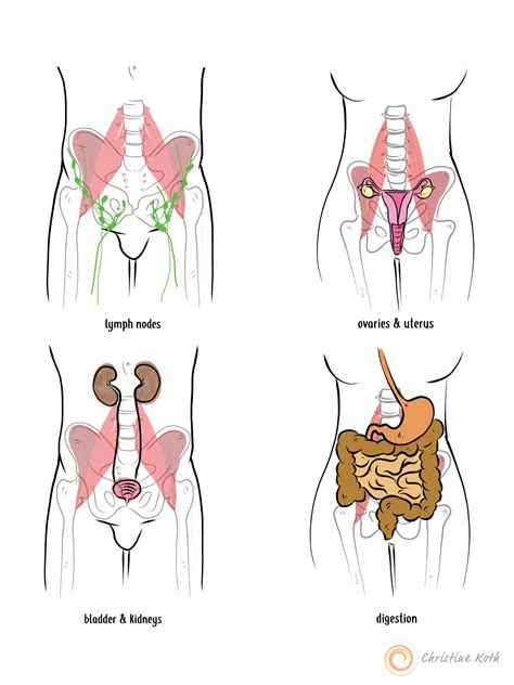 where are the hip flexors located synonyms for different places