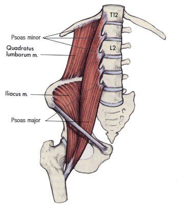 where is psoa and hip flexor muscles palpation of abdomen