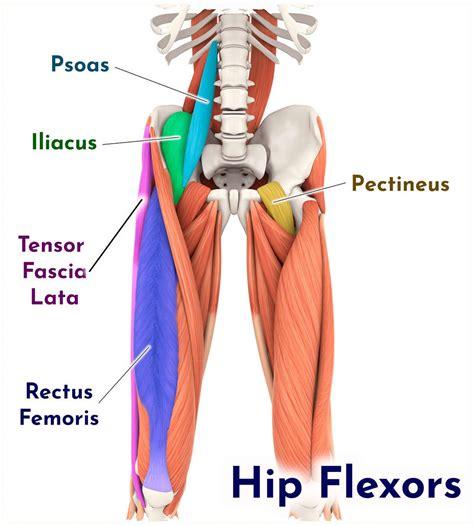where is the hip flexor lovated