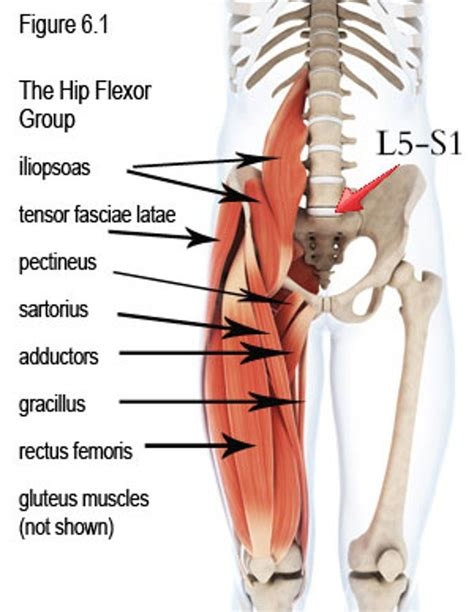 where is the hip flexor muscle located beneath