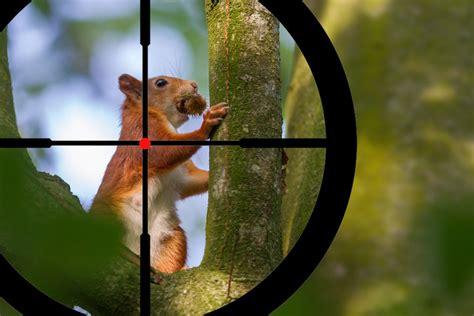 Shotgun-Question Where To Shoot A Squirrel With A Shotgun.