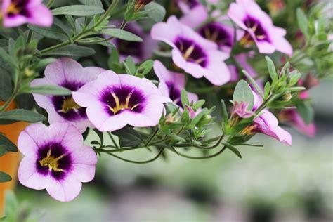 Winterharte Pflanzen Für Ampeln