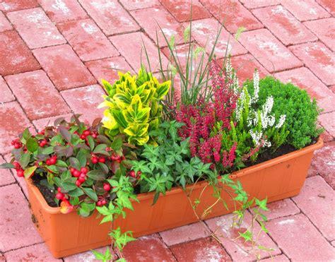 Winterharte Pflanzen Für Blumenkasten