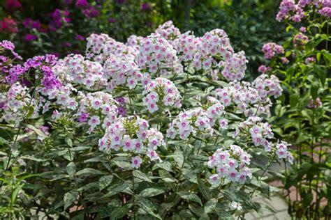 Winterharte Pflanzen Für Lehmboden