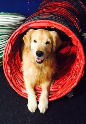Wolverine Dog Training Club Farmington Hills Mi