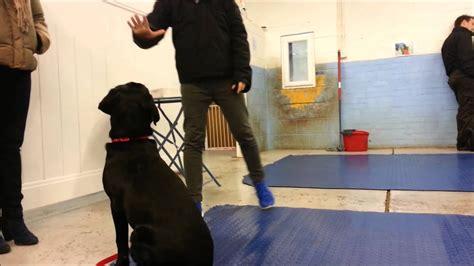 Woof Dog Training