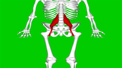 yoga for hip flexor pain after hip arthrogram youtube music videos
