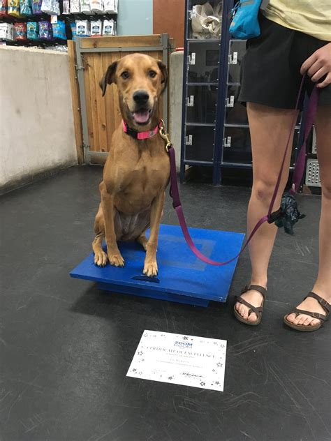 Zoom Room Dog Training Austin
