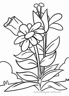 Blumen Bilder Malvorlagen Malvorlage Blume Malvorlagen Blumen Ausmalbilder Und