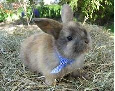 Nagetiere Kaninchen Tieranzeigen Seite 1