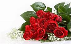 Kumpulan Gambar Bunga Yang Indah Kumpulan Gambar