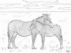 grant s plain zebras coloring page free printable