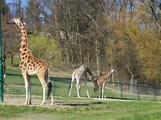 Zoo Route In Hessen