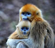 30 cutest baby animals with mothers style arena