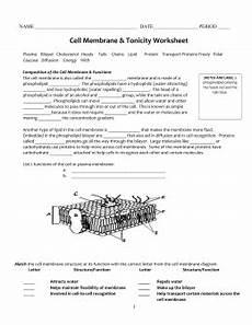 cell membrane answer key