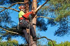 How Much Does An Arborist Make Usa Today Classifieds