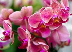 Wow 30 Gambar Bunga Anggrek Jpg Gambar Bunga Hd