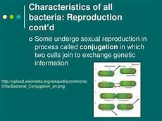 ppt 2 1 the prokaryotes eubacteria and archaea powerpoint presentation id 292112
