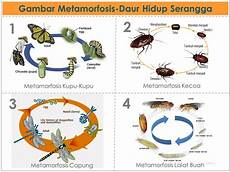 Metamorfosis Satusgiga
