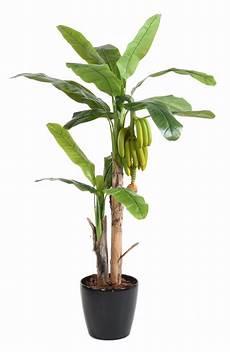 arbre fruitier intérieur arbre artificiel fruitier bananier r 233 gime de banane