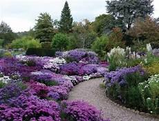 giardini in fiore foto giardinaggio ponte in valtellina aster
