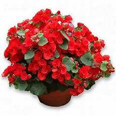 piante di fiori consegna fiori a domicilio omaggi floreali vendita on line