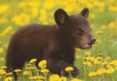 Encyclopaedia Of Babies Of Beautiful Wild Animals