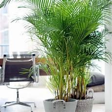 Plante Interieur Pas Cher Grande Plante Interieur Pas Cher Scoooter Gt