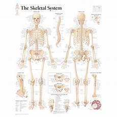human skeletal system diagram labeled the skeletal system anatomy health media