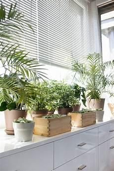 Dekotipps Zimmerpflanzen Topfpflanzen Fenster Dekoreiren