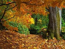 Fall Backgrounds Gif fall thanksgiving wallpapers wallpaper cave
