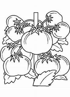Malvorlagen Obst Werden Malvorlagen Obst Kostenlos