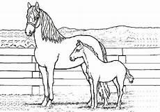 ausmalbilder pferde mit fohlen und reiter malvorlagen