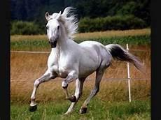 Schöne Pferde Bilder - sch 246 ner pferde