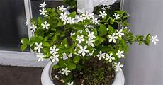 Echter Zimmerpflanze Kaufen - keep plant in your room reduces anxiety