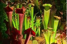 Fleischfressende Pflanzen Richtig Pflegen