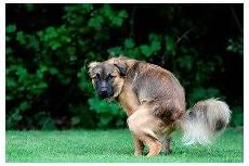 Hundeabwehr Gegen Katzen