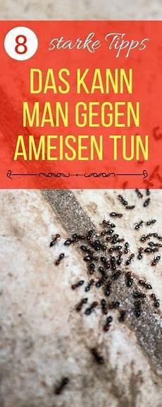 Was Hilft Gegen Ameisen Im Garten - ameisen im haus bek 228 mpfen so geht es richtig tipps